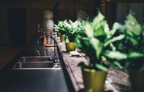 Tri sobne biljke koje su najjednostavnije za negu