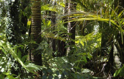 U Amazoniji otkriveno preko 11.000 vrsta drveća