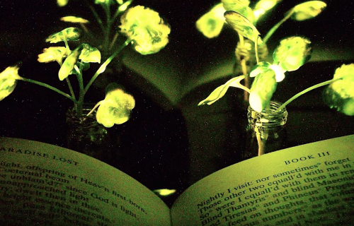 Ulice budućnosti biće osvetljene biljkama (VIDEO)