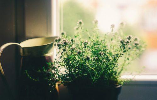 5 najboljih biljaka za prečišćavanje vazduha u prostorijama