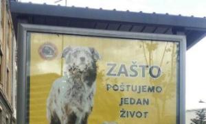 Vegani u akciji: Širom Srbije osvanule reklame i zbunile građane