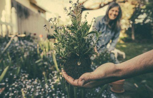Sada je idealno vreme za presađivanje biljaka: Evo koja je zemlja dobra za saksije