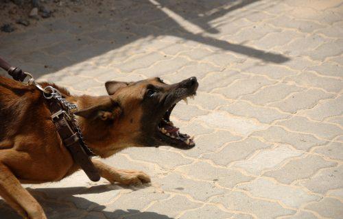 Odneli mu patiku, tresao se od straha, nije mogao da govori: Čopor pasa napao dečaka (11) u Bajinoj Bašti