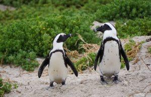 Car! Prevalio 100 godina života, pa pred smrt pronašao idealan hobi – pingvinima pravio DŽEMPERE (VIDEO)